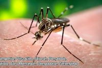 Pengertian Virus Zika