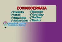 pengertian echinodermata